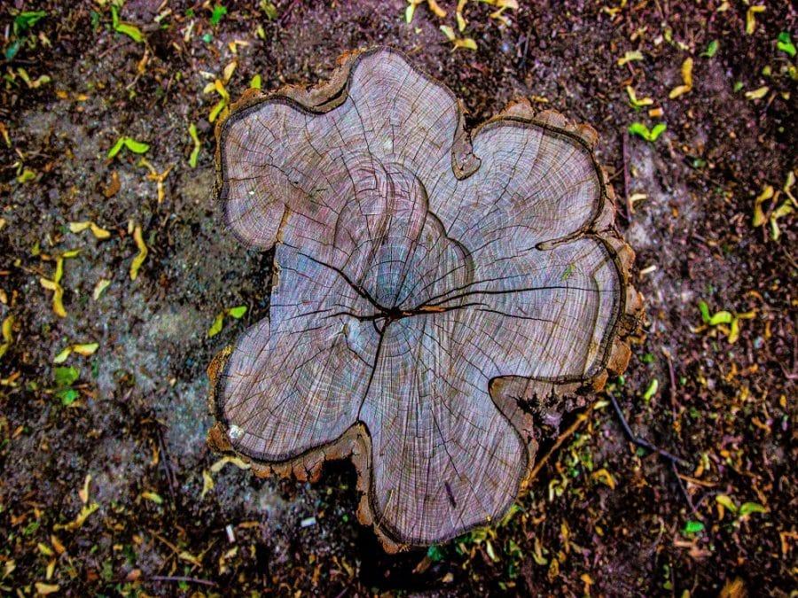 tronco di albero tagliato