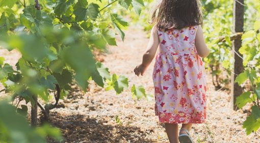 Bambina cammina in un vigneto tra l'uva