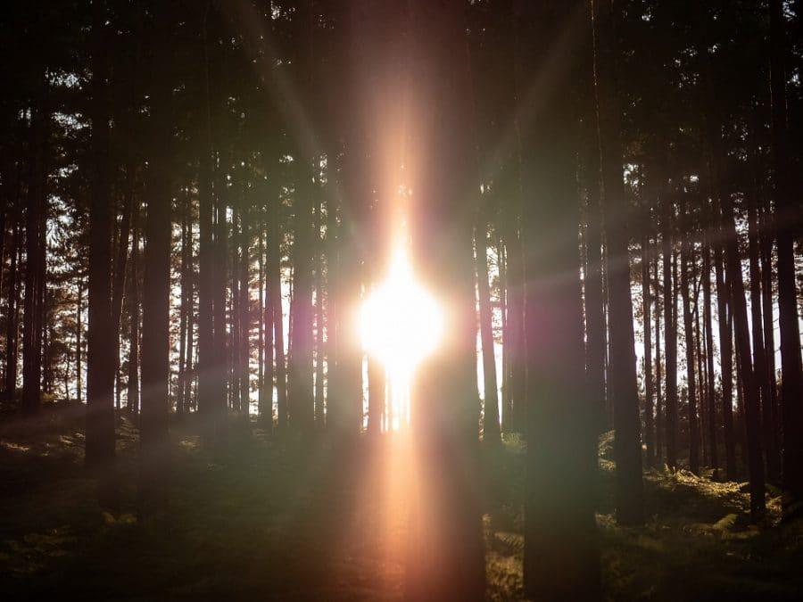 Fascio di luce che attraversa gli alberi di una foresta