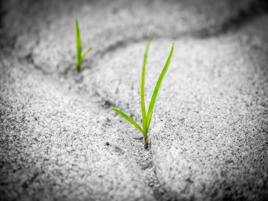 La resilienza di un filo d'erba cresciuto nell'asfalto