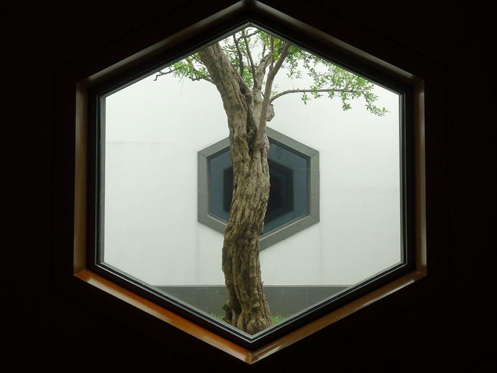 Quercia vista da una finestra