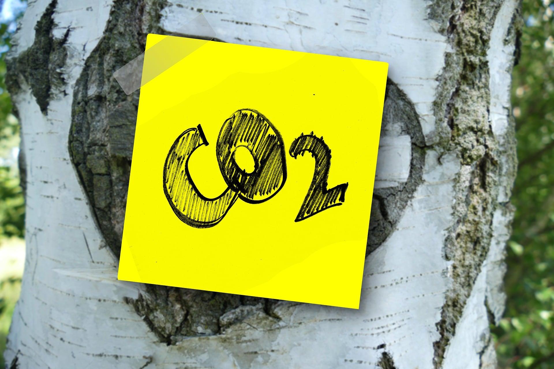 CO2 e alberi