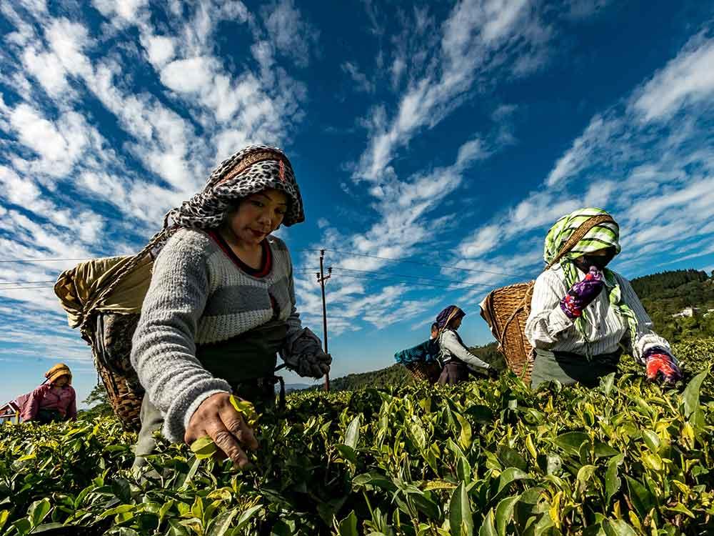 Accesso a cibo sostenibile