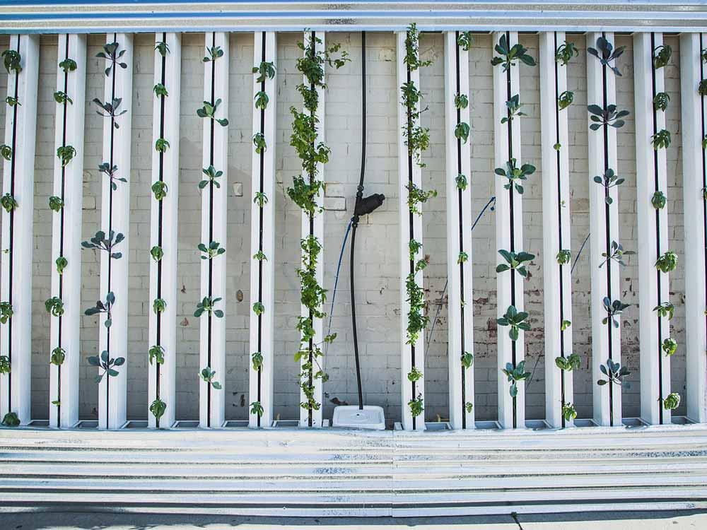 come funziona una vertical farm