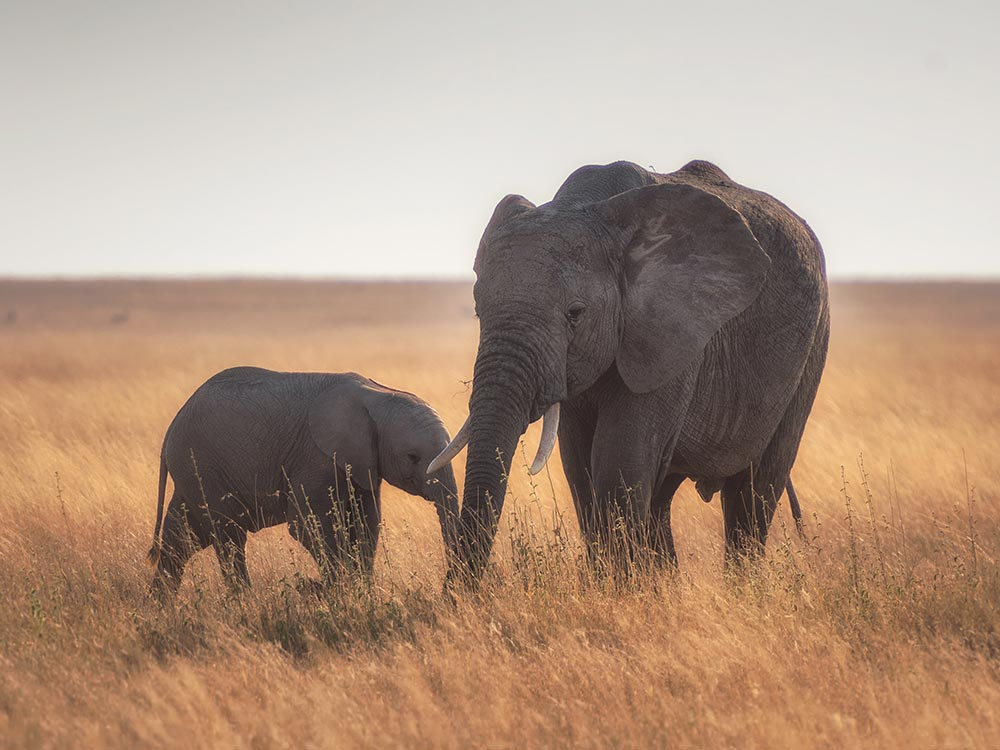 elefanti a rischiov