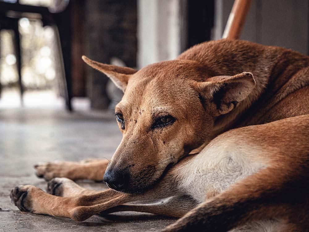 abbandonare gli animali è un reato