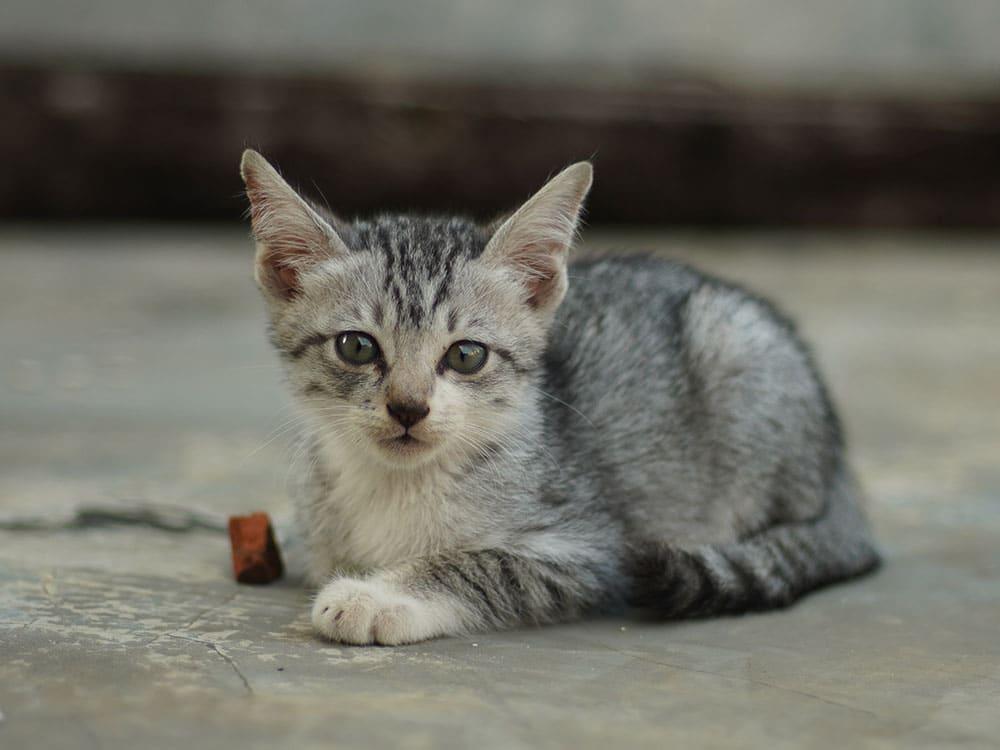 gatto abbandonato
