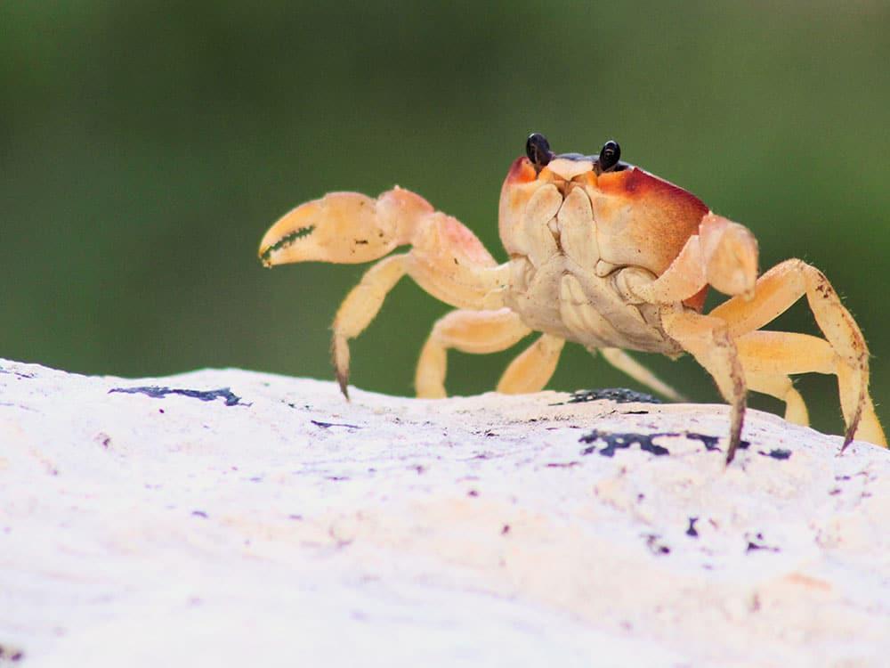proteggere animali marini