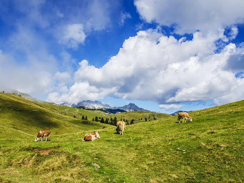 impronta ambientale carne